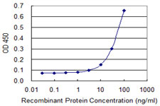 PPP2R1A Antibody - Detection limit for recombinant GST tagged PPP2R1A is 3 ng/ml as a capture antibody.