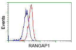 Flow cytometry of HeLa cells, using anti-RANGAP1 antibody, (Red), compared to a nonspecific negative control antibody, (Blue).