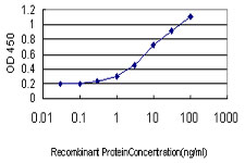 RBFOX2 / RBM9 Antibody - Detection limit for recombinant GST tagged RBM9 is approximately 0.1 ng/ml as a capture antibody.