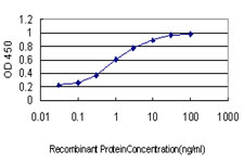 RPS6KB1 / P70S6K / S6K Antibody - Detection limit for recombinant GST tagged RPS6KB1 is approximately 0.03 ng/ml as a capture antibody.
