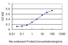 SAE1 Antibody - Detection limit for recombinant GST tagged SAE1 is approximately 0.1 ng/ml as a capture antibody.