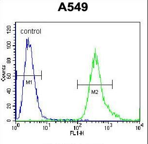 SLC25A6 / ANT3 Antibody - SLC25A6 Antibody flow cytometry of A549 cells (right histogram) compared to a negative control cell (left histogram). FITC-conjugated goat-anti-rabbit secondary antibodies were used for the analysis.