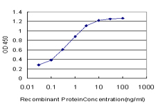 SPRR3 Antibody - Detection limit for recombinant GST tagged SPRR3 is approximately 0.03 ng/ml as a capture antibody.