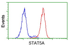 STAT5A Antibody - Flow cytometry of HeLa cells, using anti-STAT5A antibody (Red), compared to a nonspecific negative control antibody (Blue).