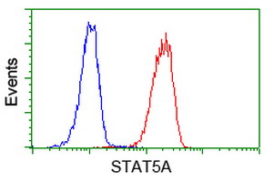 STAT5A Antibody - Flow cytometry of Jurkat cells, using anti-STAT5A antibody (Red), compared to a nonspecific negative control antibody (Blue).