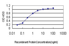 SYMPK / Symplekin Antibody - Detection limit for recombinant GST tagged SYMPK is approximately 0.03 ng/ml as a capture antibody.