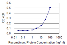 VCP Antibody - Detection limit for recombinant GST tagged VCP is 1 ng/ml as a capture antibody.