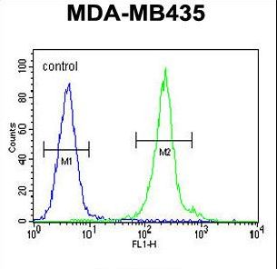 IL12B Antibody flow cytometry of MDA-MB435 cells (right histogram) compared to a negative control cell (left histogram). FITC-conjugated goat-anti-rabbit secondary antibodies were used for the analysis.