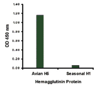 Hemagglutinin antibody at 1 ug/ml specifically recognizes Avian H5N1 influenza virus but not seasonal influenza virus A H1N1 Hemagglutinin protein.