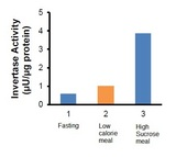 Detection of bacterial Invertase activity in human saliv(a) Samples collected: 1- Fasting; 2- Low calorie meal and 3: High Sucrose meal. Undiluted samples (1 and 2 = 25 µl and 3 = 10 µl) were incubated for 20 min. with Invertase substrate.