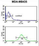 NARFL Antibody flow cytometry of MDA-MB435 cells (bottom histogram) compared to a negative control cell (top histogram). FITC-conjugated goat-anti-rabbit secondary antibodies were used for the analysis.
