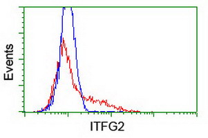 ITFG2 Antibody - HEK293T cells transfected with either overexpress plasmid (Red) or empty vector control plasmid (Blue) were immunostained by anti-ITFG2 antibody, and then analyzed by flow cytometry.
