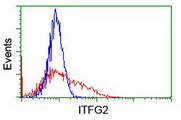 HEK293T cells transfected with either overexpress plasmid (Red) or empty vector control plasmid (Blue) were immunostained by anti-ITFG2 antibody, and then analyzed by flow cytometry.