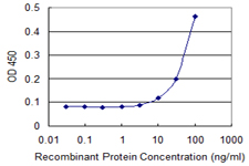 ITPA Antibody - Detection limit for recombinant GST tagged ITPA is 3 ng/ml as a capture antibody.