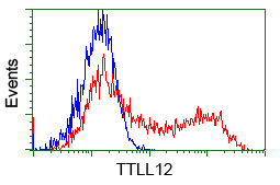 HEK293T cells transfected with either pCMV6-ENTRY TTLL12 (Red) or empty vector control plasmid (Blue) were immunostained with anti-TTLL12 mouse monoclonal(Dilution 1:1,000), and then analyzed by flow cytometry.