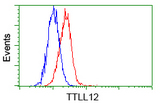 Flow cytometric analysis of Hela cells, using anti-TTLL12 antibody, (Red) compared to a nonspecific negative control antibody (Blue).