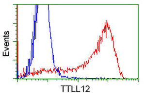 KIAA0153 / TTLL12 Antibody - HEK293T cells transfected with either overexpress plasmid (Red) or empty vector control plasmid (Blue) were immunostained by anti-TTLL12 antibody, and then analyzed by flow cytometry.