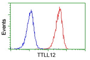 KIAA0153 / TTLL12 Antibody - Flow cytometry of Jurkat cells, using anti-TTLL12 antibody (Red), compared to a nonspecific negative control antibody (Blue).