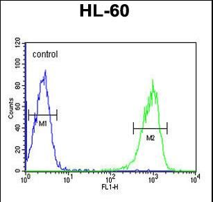 KIR2DL2 Antibody (C-term) flow cytometric analysis of HL-60 cells (right histogram) compared to a negative control cell (left histogram).FITC-conjugated goat-anti-rabbit secondary antibodies were used for the analysis.