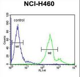 LAPTM5 Antibody flow cytometry of NCI-H460 cells (right histogram) compared to a negative control cell (left histogram). FITC-conjugated goat-anti-rabbit secondary antibodies were used for the analysis.