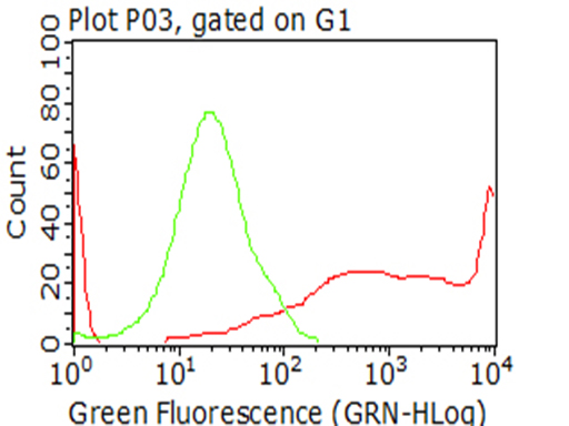 LDLR / LDL Receptor Antibody - Flow cytometric analysis of living 293T cells transfected with LDLR overexpression plasmid , Red)/empty vector  Blue) using anti-LDLR antibody. Cells incubated with a non-specific antibody. (Green) were used as isotype control. (1:100)