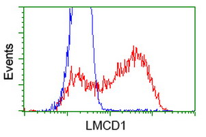 HEK293T cells transfected with either overexpress plasmid (Red) or empty vector control plasmid (Blue) were immunostained by anti-LMCD1 antibody, and then analyzed by flow cytometry.