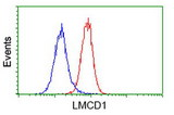 Flow cytometry of HeLa cells, using anti-LMCD1 antibody (Red), compared to a nonspecific negative control antibody (Blue).