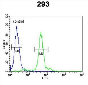 LOX Antibody flow cytometry of 293 cells (right histogram) compared to a negative control cell (left histogram). FITC-conjugated goat-anti-rabbit secondary antibodies were used for the analysis.