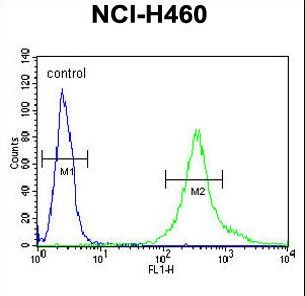 LPPR4 Antibody flow cytometry of NCI-H460 cells (right histogram) compared to a negative control cell (left histogram). FITC-conjugated goat-anti-rabbit secondary antibodies were used for the analysis.