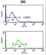 LRG1 Antibody flow cytometry of 293 cells (bottom histogram) compared to a negative control cell (top histogram). FITC-conjugated goat-anti-rabbit secondary antibodies were used for the analysis.