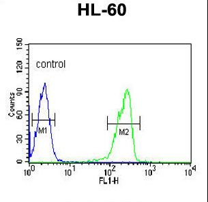LRG1 Antibody flow cytometry of HL-60 cells (right histogram) compared to a negative control cell (left histogram). FITC-conjugated goat-anti-rabbit secondary antibodies were used for the analysis.