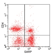 BALB/c splenocytes stained with anti-GARP (Polyclonal Antibody to GARP/LRRC32), with a FITC conjugated secondary,, and anti-mouse CD4 PE,. Viable cells in the lymphocyte gate were used for analysis.