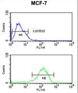 LSP1 Antibody - LSP1 Antibody flow cytometry of MCF-7 cells (bottom histogram) compared to a negative control cell (top histogram). FITC-conjugated goat-anti-rabbit secondary antibodies were used for the analysis.