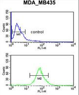 LUZP1 Antibody - LUZP1 Antibody flow cytometry of MDA-MB435 cells (bottom histogram) compared to a negative control cell (top histogram). FITC-conjugated goat-anti-rabbit secondary antibodies were used for the analysis.
