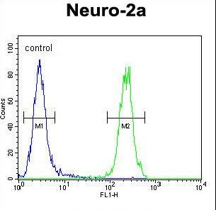 MAF1 Antibody flow cytometry of Neuro-2a cells (right histogram) compared to a negative control cell (left histogram). FITC-conjugated goat-anti-rabbit secondary antibodies were used for the analysis.