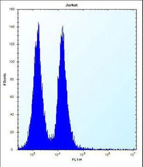 MAFB Antibody - MAFB Antibody flow cytometry of Jurkat cells (right histogram) compared to a negative control cell (left histogram). FITC-conjugated donkey-anti-rabbit secondary antibodies were used for the analysis.