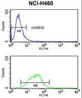 MAG Antibody - MAG Antibody flow cytometry of NCI-H460 cells (bottom histogram) compared to a negative control cell (top histogram). FITC-conjugated goat-anti-rabbit secondary antibodies were used for the analysis.