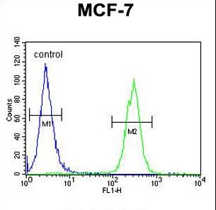 MAP1LC3B / LC3B Antibody - APG8b (MAP1LC3B)-T93/Y99 Antibody flow cytometry of MCF-7 cells (right histogram) compared to a negative control cell (left histogram). FITC-conjugated goat-anti-rabbit secondary antibodies were used for the analysis.