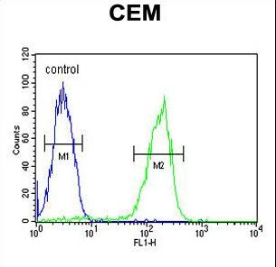MAP1S Antibody flow cytometry of CEM cells (right histogram) compared to a negative control cell (left histogram). FITC-conjugated goat-anti-rabbit secondary antibodies were used for the analysis.