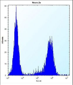 MAP3K15 Antibody flow cytometry of Neuro-2a cells (right histogram) compared to a negative control cell (left histogram). FITC-conjugated donkey-anti-rabbit secondary antibodies were used for the analysis.