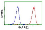 Flow cytometry of Jurkat cells, using anti-MAPRE2 antibody (Red), compared to a nonspecific negative control antibody (Blue).