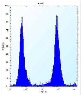 MCF2 / DBL Antibody - MCF2 Antibody flow cytometry of K562 cells (right histogram) compared to a negative control cell (left histogram). FITC-conjugated donkey-anti-rabbit secondary antibodies were used for the analysis.