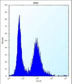 MEIG1 Antibody flow cytometry of K562 cells (right histogram) compared to a negative control cell (left histogram). FITC-conjugated donkey-anti-rabbit secondary antibodies were used for the analysis.