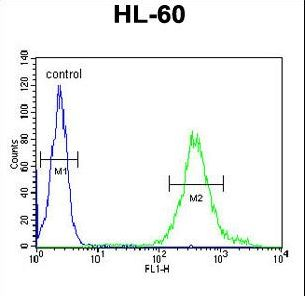 METT11D1 Antibody - M11D1 Antibody flow cytometry of HL-60 cells (right histogram) compared to a negative control cell (left histogram). FITC-conjugated goat-anti-rabbit secondary antibodies were used for the analysis.