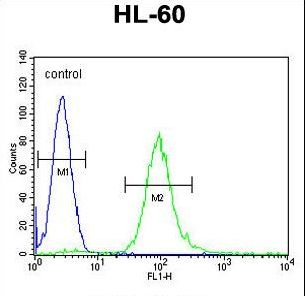 METTL10 Antibody flow cytometry of HL-60 cells (right histogram) compared to a negative control cell (left histogram). FITC-conjugated goat-anti-rabbit secondary antibodies were used for the analysis.