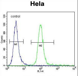HMFG Antibody flow cytometry of HeLa cells (right histogram) compared to a negative control cell (left histogram). FITC-conjugated goat-anti-rabbit secondary antibodies were used for the analysis.