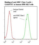 MHC Class I Antibody - Flow cytometry of MHC Class I antibody This image was taken for the unmodified form of this product. Other forms have not been tested.