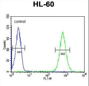 MICALL2 Antibody - MILK2 Antibody flow cytometry of HL-60 cells (right histogram) compared to a negative control cell (left histogram). FITC-conjugated goat-anti-rabbit secondary antibodies were used for the analysis.