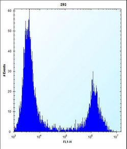 MID1IP1 Antibody flow cytometry of 293 cells (right histogram) compared to a negative control cell (left histogram). FITC-conjugated goat-anti-rabbit secondary antibodies were used for the analysis.