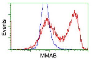 MMAB Antibody - HEK293T cells transfected with either overexpress plasmid (Red) or empty vector control plasmid (Blue) were immunostained by anti-MMAB antibody, and then analyzed by flow cytometry.